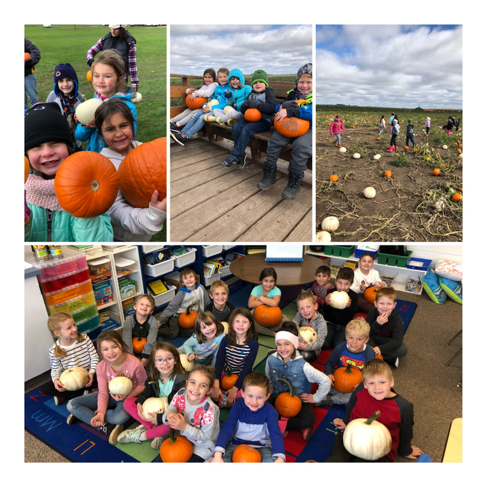 1st Grade Pumpkin Patch